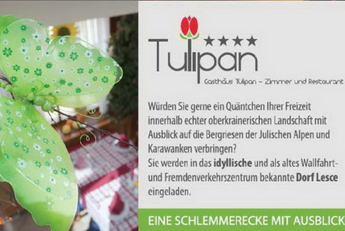 tulipan_1